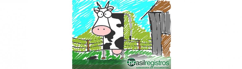 Tem sítio ou fazenda no Brasil?